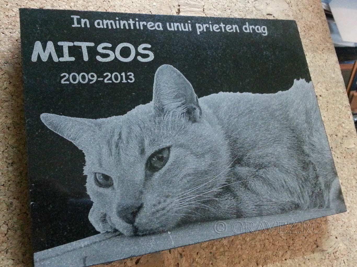 gravura laser in granit placa funerara pisica
